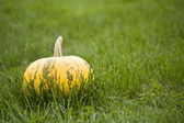 Pumpkin — Stockfoto