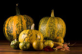 Pumpkins — Photo