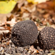 Foto Stock: Black truffles
