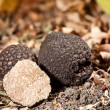 Black truffles - Stock Photo