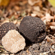 Black truffles — Stock Photo #7515158