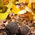 黑菌 — 图库照片