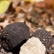 Black truffles — Foto Stock