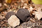 Zwarte truffels — Stockfoto