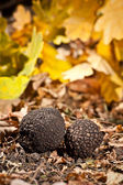 Black truffles — Stock Photo