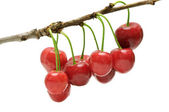 Twig sweet cherries — Stock Photo