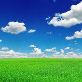 Pole i błękitne niebo — Zdjęcie stockowe