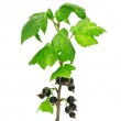 Black currant — Stock Photo #7508921