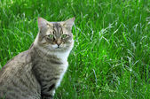 Cat on a background of a green grass — Stock Photo