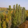 Panorama of the autumn park — Stock Photo