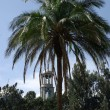 Palm tree in Addis Ababa, Ethiopia — 图库照片