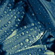 Water Droplets on Plant Close Up — Foto Stock