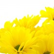 Beautiful bouquet of yellow chrysanthemums — Stock Photo #6757614