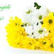 Beautiful bouquet of yellow chrysanthemums — Stock Photo #6757671