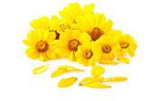 Flores amarillas — Foto de Stock