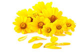 Yellow flowers — Stock fotografie
