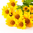 Yellow flowers — Stock Photo #6800852