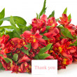 alstroemeria — Stock Photo #6856185