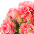 Begonia — Stock Photo #6951158