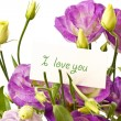 Stock Photo: Lisianthus