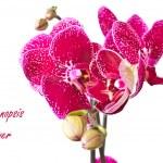 Phalaenopsis flower — Stock Photo