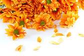 Orange flowers Chrysanthemum — Stock Photo