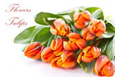 Reddish orange tulips — Stock Photo