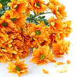 Orange flowers Chrysanthemum — Stock Photo #7843932