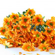 Stock Photo: Orange flowers Chrysanthemum