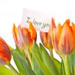 Stock Photo: Reddish orange tulips