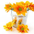Yellow flowering Chrysanthemums in a bucket — Stock Photo