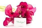 Red Flower Calla — Stock Photo