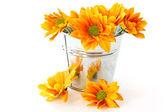 Yellow flowering Chrysanthemums in a bucket — Stock Photo