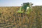 Harvesting of sunflower seeds — Stock Photo