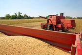 Soya harvesting — Stock Photo