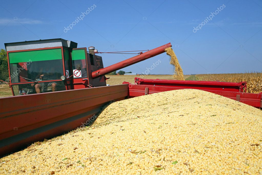 Harvesting of soybean at the filed in Europe — Stock Photo #7188404