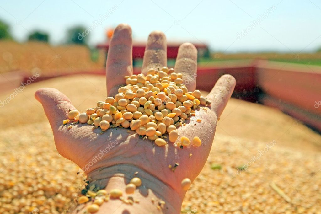 Harvesting and transportation of soybean — Stock Photo #7188674