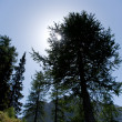 Trees in the moutains — Stock Photo