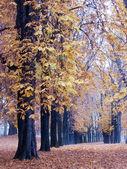 Wilde kastanje bomen in de herfst — Stockfoto