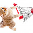 Cat with shopping cart top view isolated on white — Stock Photo