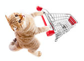 Cat with shopping cart top view isolated on white — Photo