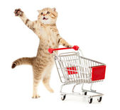 Cat with shopping cart isolated on white — Stock Photo