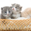 Small cute kitten sitting in a basket, close-up - Foto Stock