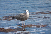 Shorebird on the beach at low tide — Stock Photo