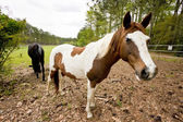 Horses In The Pasture — Stock Photo