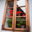 Geraniums in the window — Stock Photo