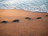 Pistas en la playa — Foto de Stock