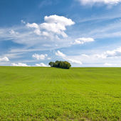 Field, forest and sky — Stock Photo