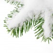 Snow on a fir tree branch — Stock Photo #7238277