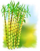 Plant of sugar cane. — Stock Vector